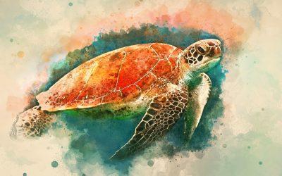 Forgiveness, Anger & Turtle Wisdom Free Livestream Weds 17th Feb @7p.m UTC